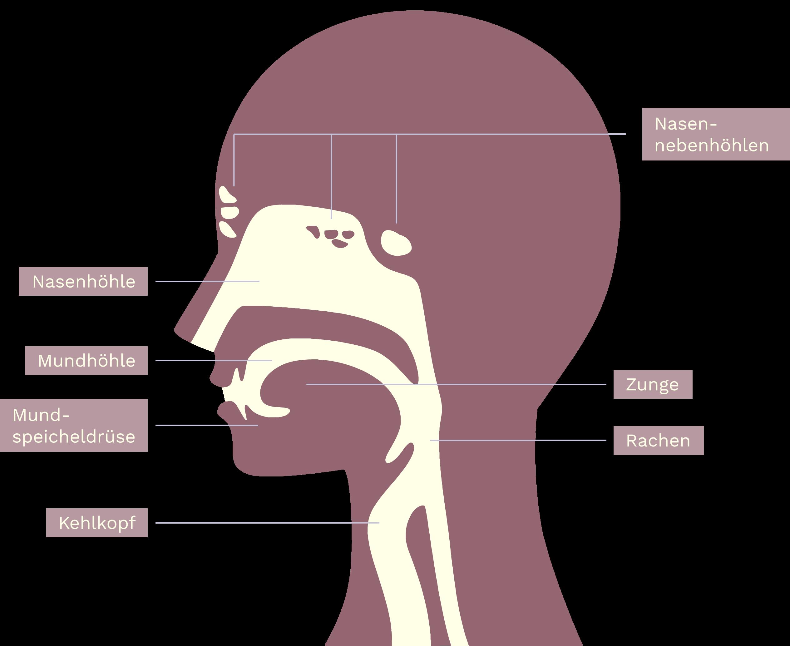 Infografik Kopf und Hals